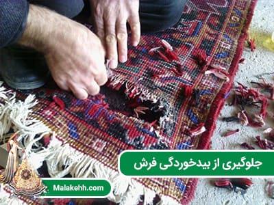 جلوگیری از بیدخوردگی فرش